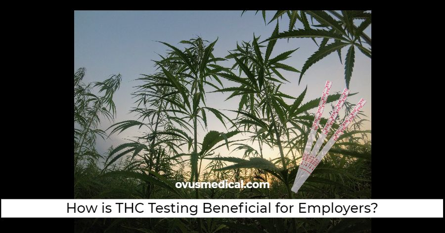 ovus medical How is THC Testing Beneficial for Employers_