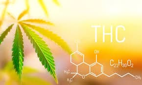 How is THC Testing Beneficial for Employers?